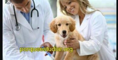 Cursos de Medicina Veterinaria