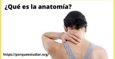 Porqué estudiar anatomía - Carreras Universitarias